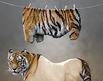Photo manipulation - Tiger Undressed