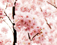 Sakurazensen