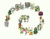 PlantKingdom-ToolBook