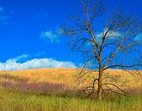 Autumn's Meadow