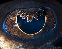 Animal eyes 3