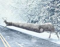 Pirelli - Winter Tires