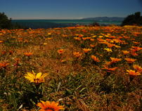 Photography - Cape Palliser, New Zealand