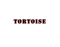 3D Character Model_ TORTOISE
