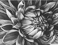 Peony | Pointillism