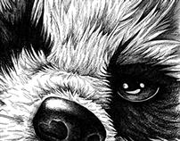 masked thief - raccoon