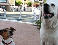 Dogs portraits
