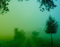 On a foggy september morning