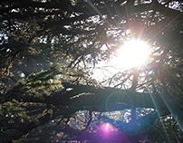 Beyond The Cedars