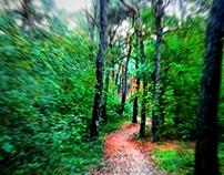 Speed Forest
