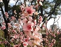 Pictogramas Jardín Japonés