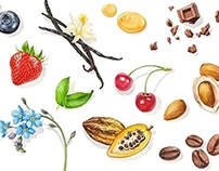 Ingredients & Nature Illustrations | IBACO