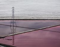 San Francisco Bay - Purple