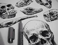Pen and Ink - Skulls part. II
