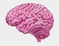 The Diverse Brain