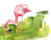 more watercolor