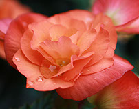 2014 Flower Study