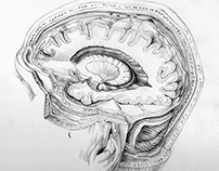 Medical illustration self-study Project 2014