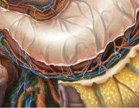 Scientific medical illustrations