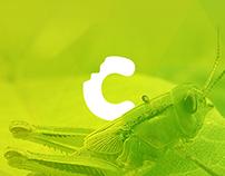 Cricket Redesign