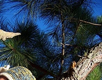 Chalet cubiro