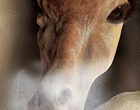 INTEL-Giraffe
