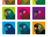 Parrot art - project