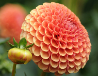 Flowers of The Northwest