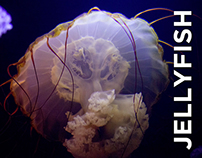 Barcelona Media Design / Jellyfish