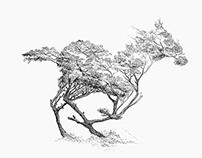 Cabezas de pájaros y otros dibujos equívocos