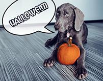 Halloween Weim