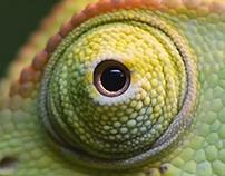 FENDI - Chameleon