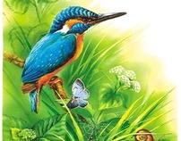 illustrations encyclopedia