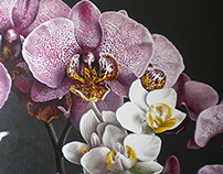 Commissioned Orchid