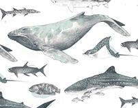 Pacífico: Gorgona y Malpelo