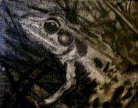 Still Frog