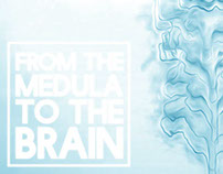 From the Medula to the Brain