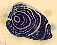 Fish Illustrations