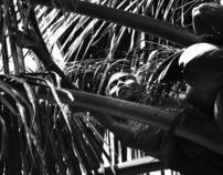 The Coconut Man
