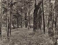Path to the Beaverkill