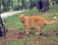 Street Cats of Istanbul 02