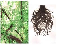 Naturalis Historia: The Natural History of Trees