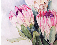 Protea in watercolor