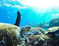 Laut Flores, Indonesia