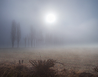A DAY WITH THE FOG