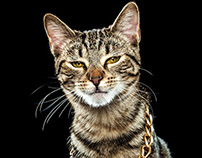 Gatos Malignos