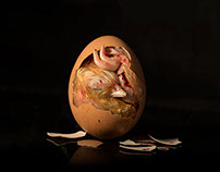 Inside the Egg