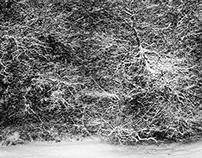 Christmas Snow, Casper, WY