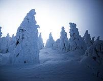 Snow Creatures