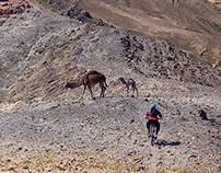 Hamitz - Cross the north Judea desert